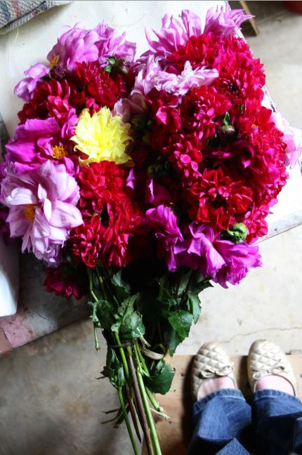 Delightful Blooms